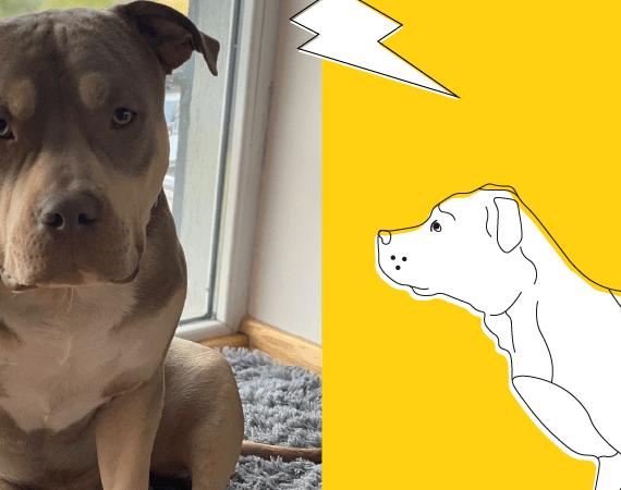Lęk przed burzą – 5 sposobów jak uspokoić psa podczas burzy