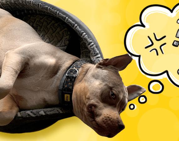 Jak zrozumieć i właściwie interpretować mowę ciała psa?